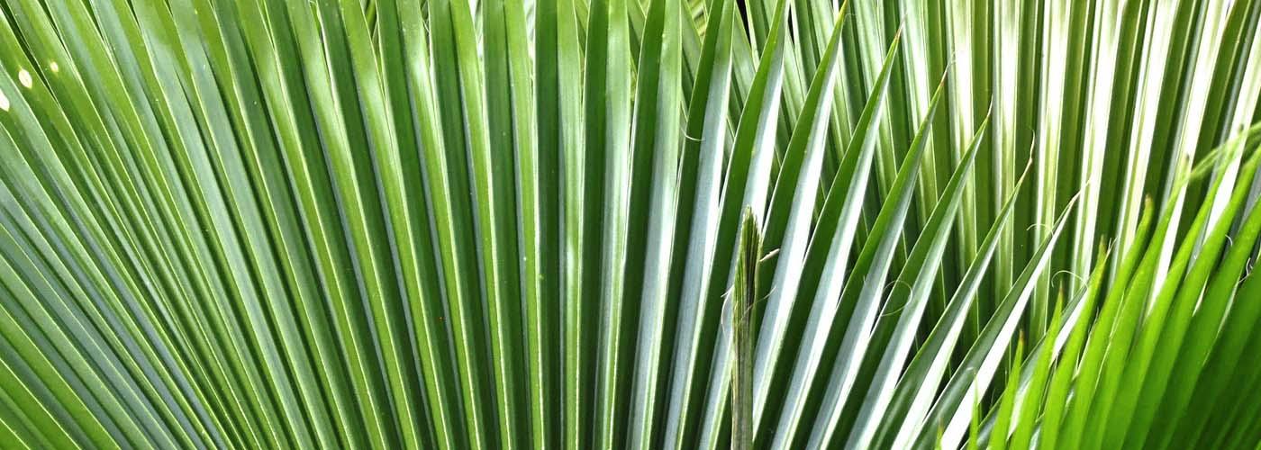 Fond feuilles