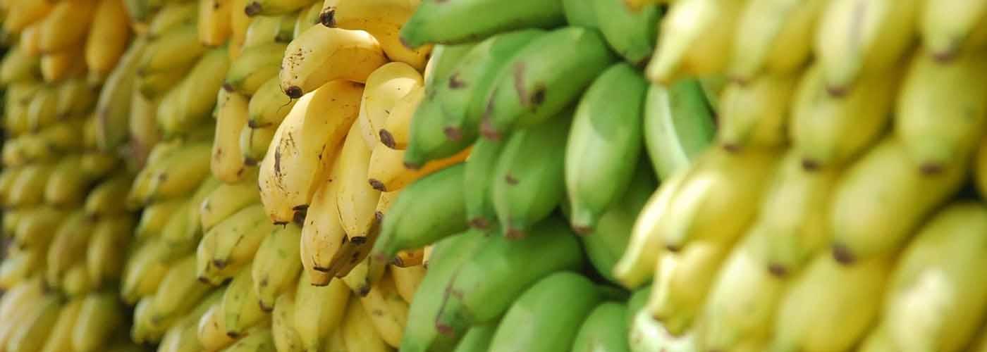 fond bananes